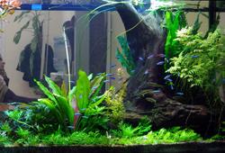oformlenie aquariuma