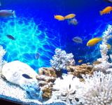 Пресноводный аквариум под ключ 1100л (псевдоморе)