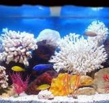Пресноводный аквариум под ключ 180л (псевдоморе)