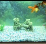 Пресноводный аквариум под ключ 180л