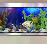 Пресноводный аквариум под ключ 200л