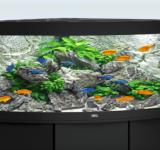 Пресноводный аквариум под ключ 210л