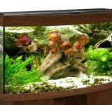 Аквариум BioDesign Панорама 240 золотой орех, 215л (без светильника)