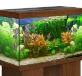 Аквариум BioDesign Риф 250 золотой орех, 230л (без светильника)