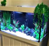 Пресноводный аквариум под ключ 260л