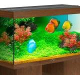 Аквариум BioDesign Риф 300 золотой орех, 300л (без светильника)