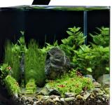 Пресноводный аквариум под ключ 35л