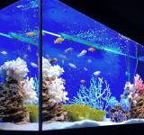 Пресноводный аквариум под ключ 450л (псевдоморе)