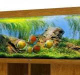 Аквариум BioDesign Атолл 500 золотой дуб, 465л (без светильника)