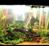 Пресноводный аквариум под ключ 650л