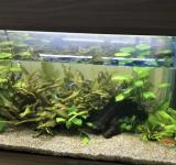 Пресноводный аквариум под ключ 70л