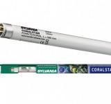 Лампа Sylvania Т5 Coralstar 24Вт 54.9см, цоколь G5