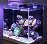 Морской аквариум под ключ 57л с кораллами