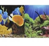 Фон Prime двухсторонний Морские кораллы/Подводный мир 50х100см