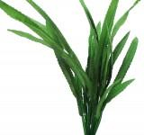 Растение Prime шелковое Криптокорина Балансе, 13см