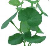 Растение Prime шелковое Кардамин, 12см