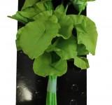 Растение Prime шелковое Нимфея, зеленое 30см