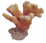 Коралл пластиковый Aqua-Pro REPLICA LIVE CORAL QFS-04B