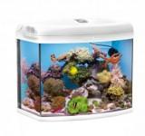 Аквариум морской Aquael Reef Master белый, 105л