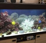 Морской аквариум под ключ 300л