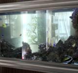Морской аквариум под ключ 600л 1 категория