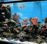 Морской аквариум под ключ 600л 2 категория