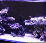 Морской аквариум под ключ 400-500л 1категория