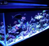 Морской аквариум под ключ 400-500л 2 категория