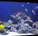 Морской аквариум под ключ 150-200л категория 1