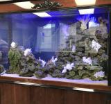 Морской аквариум под ключ 900л 1 категория