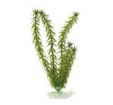 Элодея (Anacharis) 30 см, растение пластиковое TetraPlantastics®