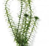Элодея (Anacharis) 38 см, растение пластиковое TetraPlantastics®