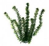 Кабомба 38 см, растение пластиковое TetraPlantastics®