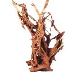 Корень мангрового дерева (водная часть) 90-145 см
