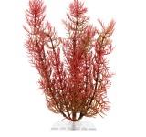 Перистолистник красный (Red Foxtail) 23 см, растение пластиковое TetraPlantastics®